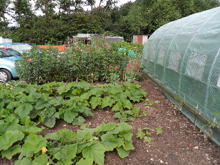 Nottingham Road & District Allotment Association